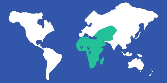 New Deal Founders en Afrique et Moyen Orient